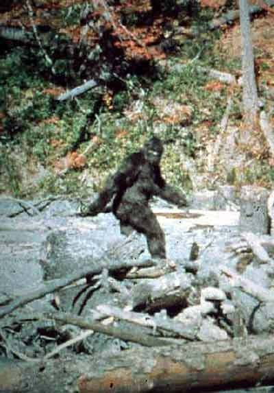 IS BIGFOOT THE MISSING LINK?