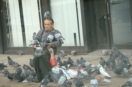 pigeon-man1