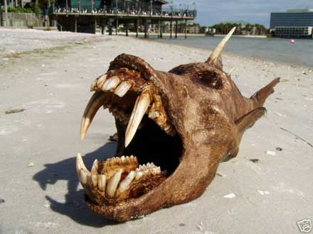 dog-mouth