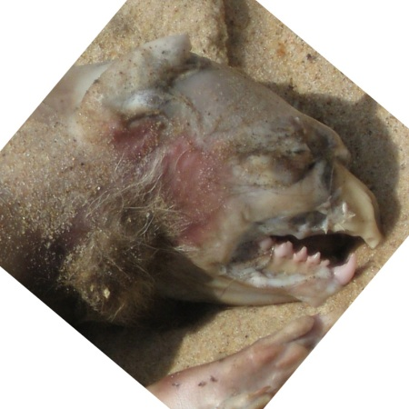 montauk_monster_mouth