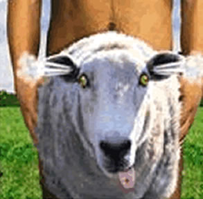 sheep_shagger1